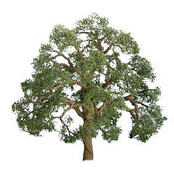 JTT Scenery Products 94348 LIVE OAK 1.5  PRO 4PK This is JTT Scenery Products 94348 LIVE OAK 1.5 PRO 4PK. Live oak tree 1.5 professional. JTT's Professional Tree Series is for the exacting modeler and discriminating professional. It features specially coated wire armatures that can be easily bent into natural shapes. Branches are defined, foliage is realistic and full. 4 per package.Its key features are:Assembled and ready to plantAccurate limbs, detailed trunk, realistic leavesCondition: Factory New (C-9All original; unused; factory rubs and evidence of handling, shipping and factory test run.Standards for all toy train related accessory items apply to the visual appearance of the item and do not consider the operating functionality of the equipment.Condition and Grading Standards are subjective, at best, and are intended to act as a guide. )Operational Status: FunctionalThis item is brand new from the factory.Original Box: Yes (P-9May have store stamps and price tags. Has inner liners.)Manufacturer: JTT Scenery ProductsModel Number: 94348MSRP: $16.75Category 1: Scenery & MaterialsCategory 2: Trees & ShrubberyAvailability: Ships in 3 to 5 Business Days.The Trainz SKU for this item is P11981641. Track: 11981641 - FS - 001 - TrainzAuctionGroup00UNK - TDIDUNK