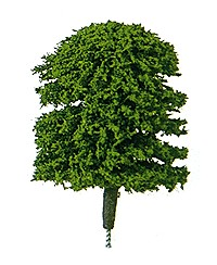 Plastruct 94001 Tree elm 1/4  H 5/ Quality, ready-made, deciduous style trees for instant landscaping. Sturdy, yet realistic, at very reasonable prices. Varying shades of green randomly packaged in clear tubes for protection. Hand fabricated from nylon, wire and foam. Sizes above 25 include brown taped trunk. Height includes the appropriate trunk length. Dimensions are approximate and may vary.Condition: Factory New (C-9All original; unused; factory rubs and evidence of handling, shipping and factory test run.Standards for all toy train related accessory items apply to the visual appearance of the item and do not consider the operating functionality of the equipment.Condition and Grading Standards are subjective, at best, and are intended to act as a guide. )Operational Status: FunctionalThis item is brand new from the factory.Original Box: Yes (P-9May have store stamps and price tags. Has inner liners.)Manufacturer: PlastructModel Number: 94001MSRP: $7.65Category 1: Scenery & MaterialsCategory 2: Trees & ShrubberyAvailability: Ships in 3 to 5 Business Days.The Trainz SKU for this item is P11518618. Track: 11518618 - FS - 001 - TrainzAuctionGroup00UNK - TDIDUNK